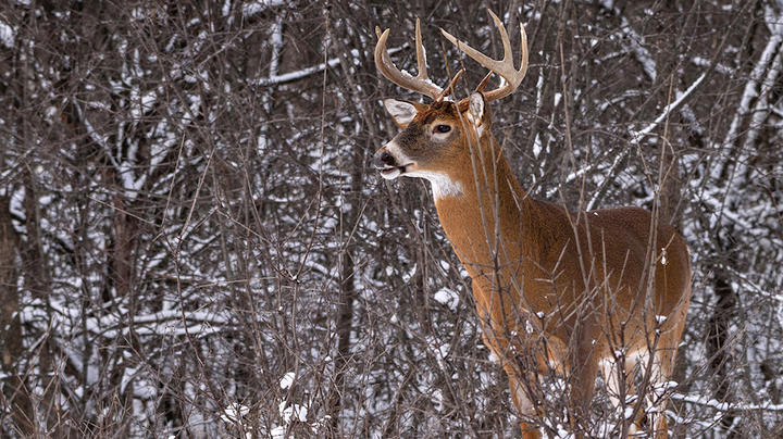 7 Mistakes Rookie Bowhunters Make Preview Image