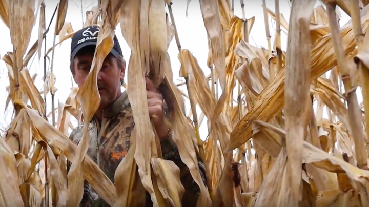 Whitetail Freaks: Brushing In Ground Blinds In Standing Corn Preview Image