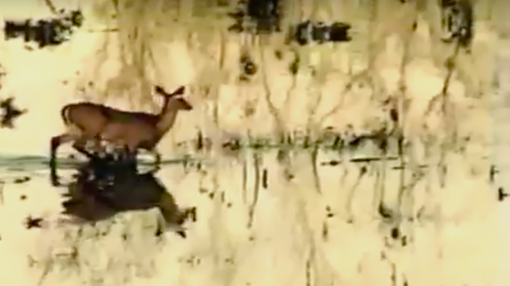Watch Phil Roberston Flip Running Deer with Rifle Shot Preview Image