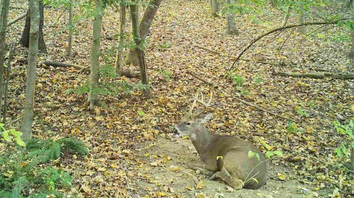 Gallery: Buck Beds Down in Scrape Preview Image