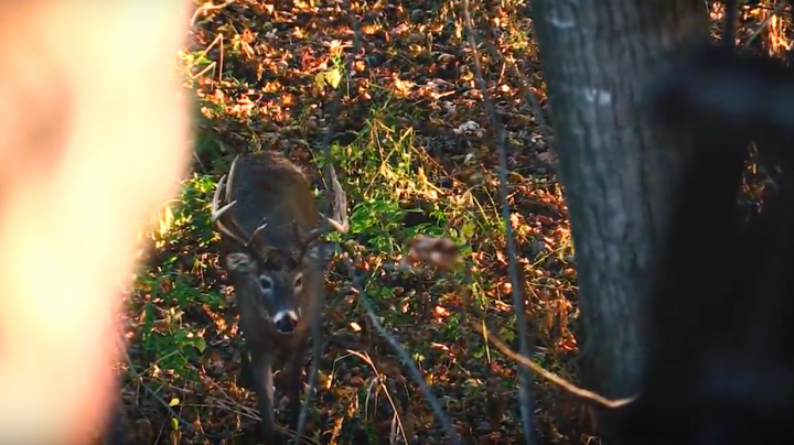 Chasing November: Public Land Double Beam Buck Preview Image