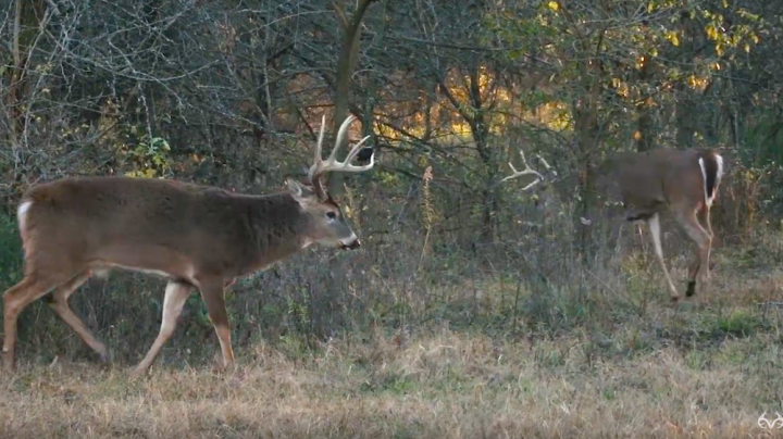 Chasing November: 160-Inch Buck from Bale Blind, Kansas Bowhunting  Preview Image