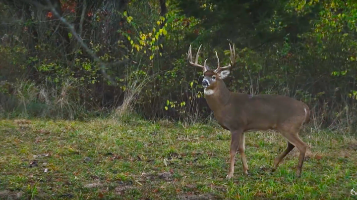Chasing November: Two Shots to Get a Booner, 200-Inch Buck Encounter  Preview Image