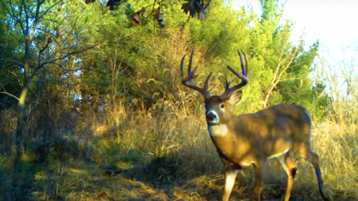 Chasing November: Booner with Wife's Bow and a Double Drop Tine Buck Preview Image
