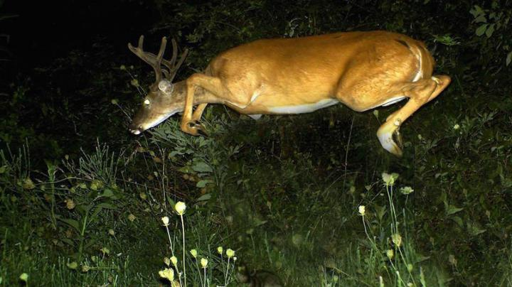 13 Crazy Trail Camera Photos Preview Image