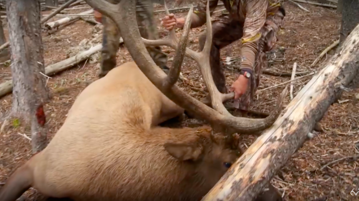 David Blanton Hunts Big Wyoming Bull Elk Preview Image