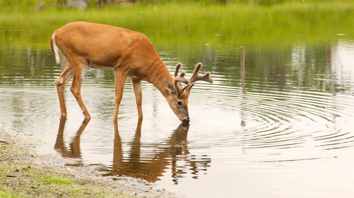 Creating Water Sources for Deer Preview Image