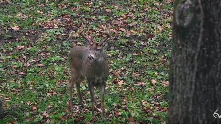 Chasing November: A Giant Buck Falls in Indiana Preview Image