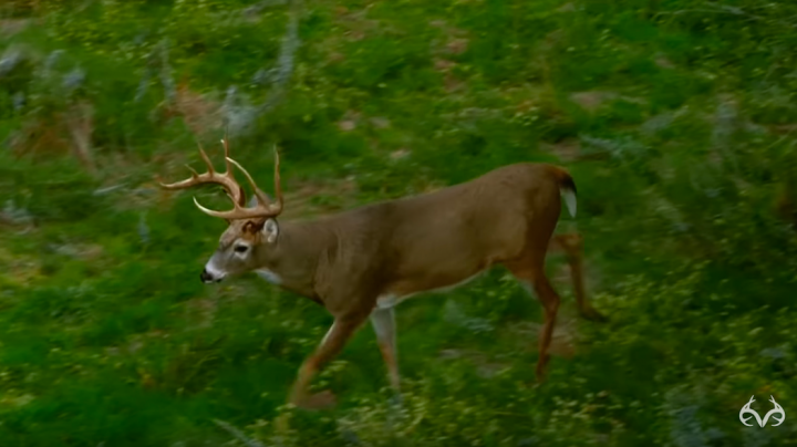 Deer Hunter Arrows Giant Buck Preview Image