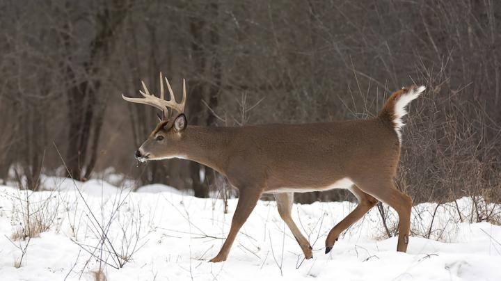 7 Tips for Using Food Sources to Fill Your Deer Tag Preview Image