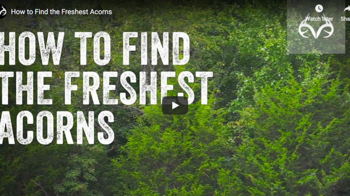 How to Find the Freshest Acorns Preview Image