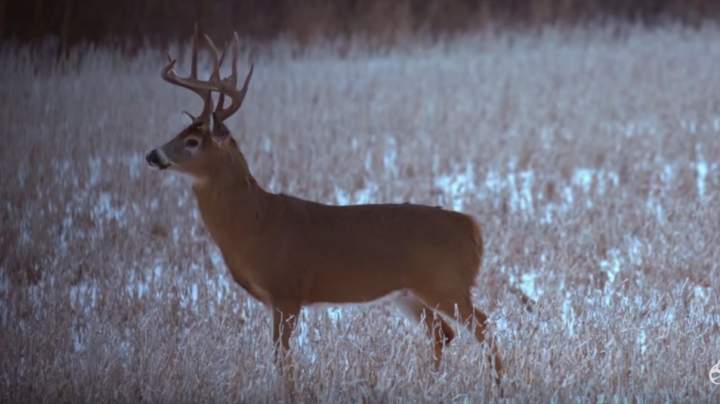 Bowhunting Late-Season Whitetails in the Snow from the Ground Preview Image