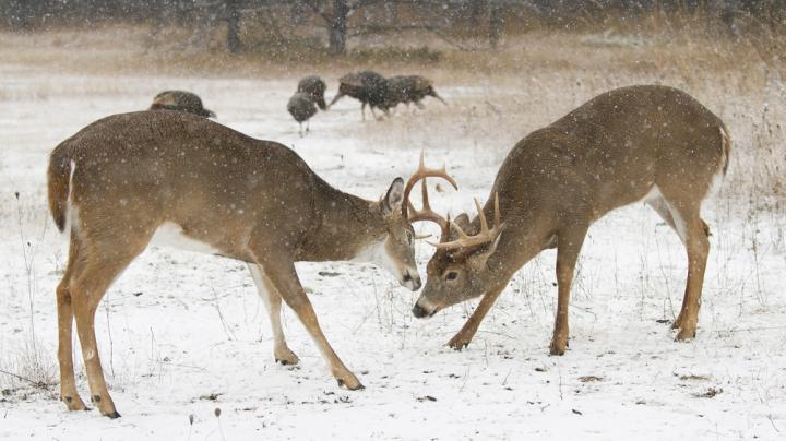 7 Factors for Daylight Deer Activity During the Late Season Preview Image