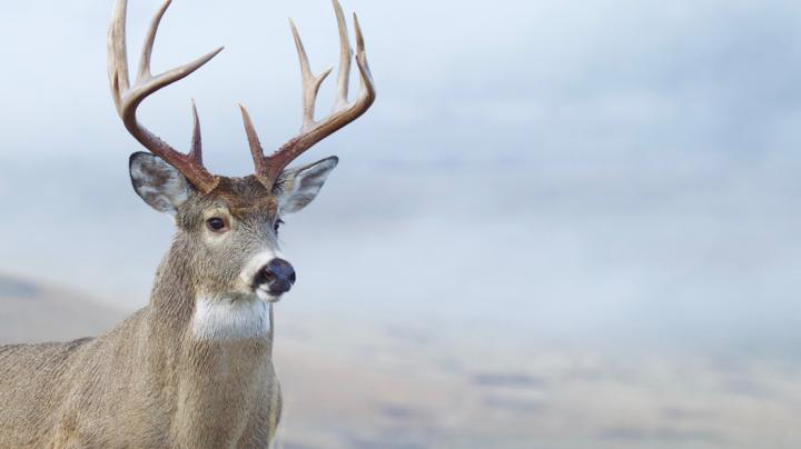 11 Deer Hunting Mistakes Even Experienced Hunters Make Preview Image