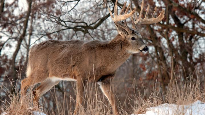 The New Golden Triangle for Record Whitetails Preview Image