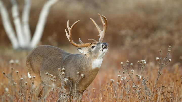 10 Whitetail Hunting Myths You Might Still Believe Preview Image