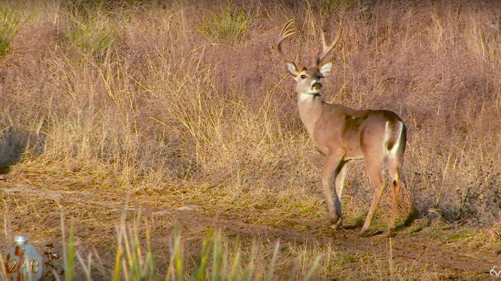 White tailed deer realtree for Realtree game and fish forecast