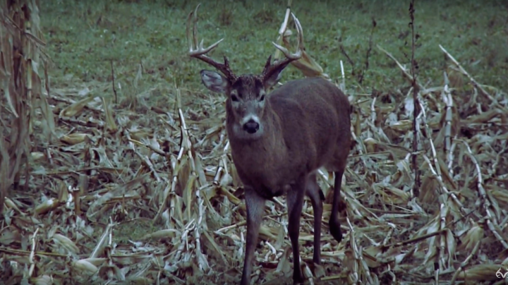 The Chronicles: Deer Hunting the Rut in Nebraska Preview Image