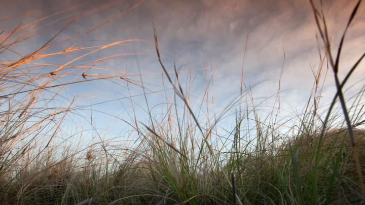 Why Native Plants Are Vital to Deer Hunting Preview Image