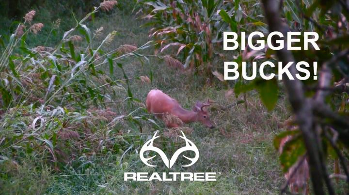 Deer Hunting: How to Have Bigger Deer Where You Hunt  Preview Image