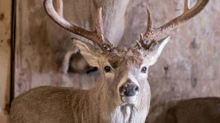 7 Different Deer Taxidermy Options and Their Costs Preview Image