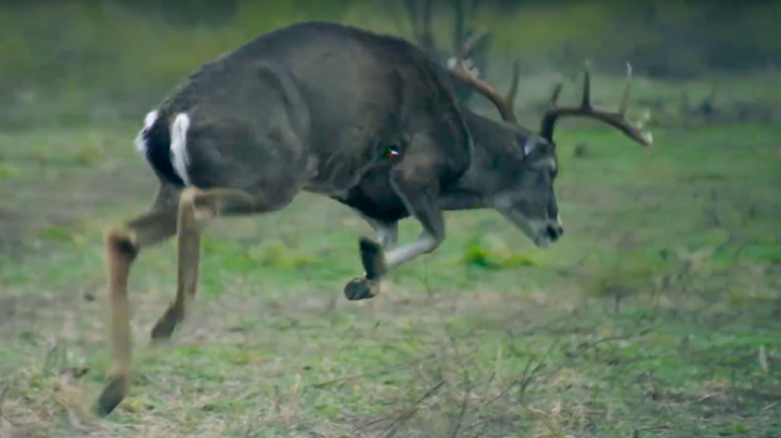 Perfect Slow Motion Archery Shot on Big Texas Buck Preview Image