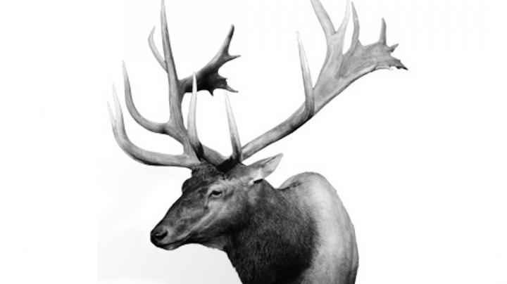The Biggest Typical and Non-Typical Bull Elk of All Time Preview Image