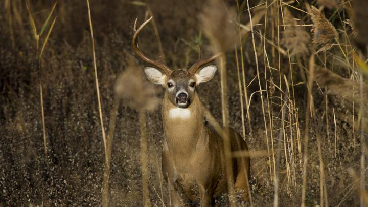 10 Most Expensive States for Deer Hunting Preview Image