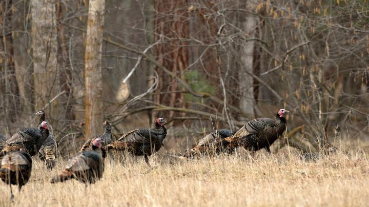 Turkey Hunting Realtree Camo