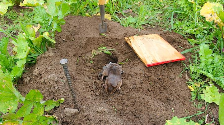 How to Deal with Food Plot Pests Preview Image