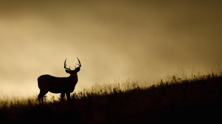 7 Reasons You Didn't Kill a Late-Season Buck Preview Image