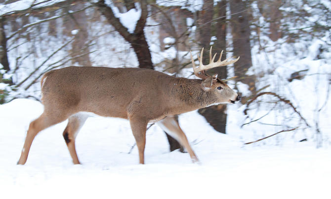 5 Places to Find Giant Late-Season Bucks Preview Image