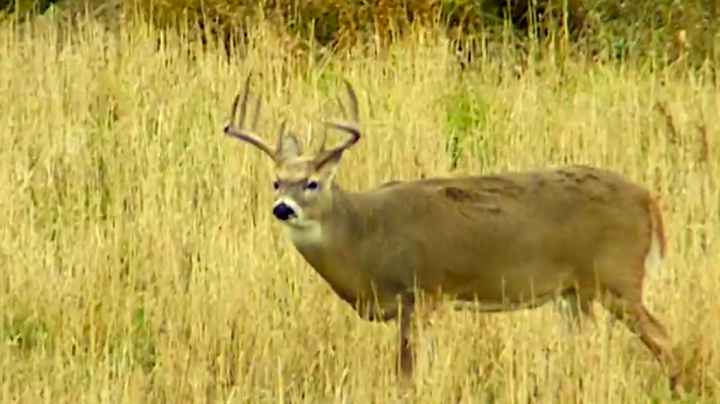 Monster Bucks Throwback: 43 Deer Hunts in One Minute Preview Image