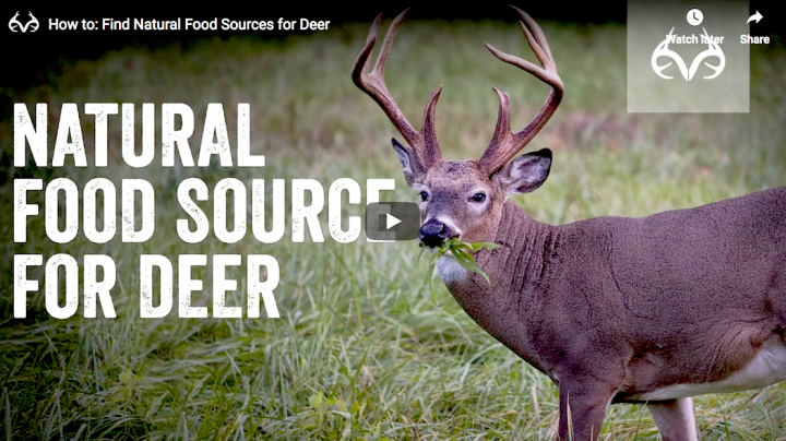 How to Find Natural Food Sources for Deer Preview Image