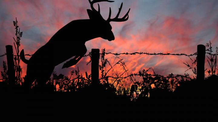 2017 North American Deer Summit: State of the Whitetail Preview Image