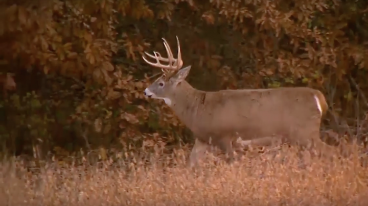Whitetail Freaks: Practice During the Off-Season for a Better Fall Preview Image