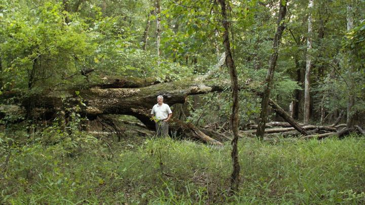 Are Young Forests Overlooked Habitat for Whitetails? Preview Image