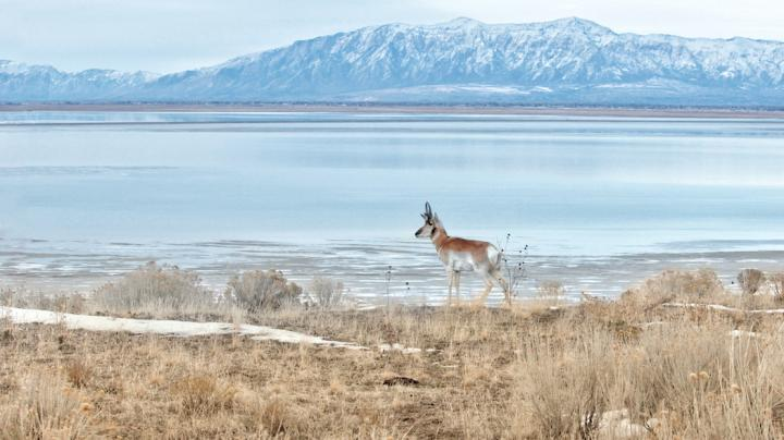 How to Kill a Pronghorn Over Water Preview Image