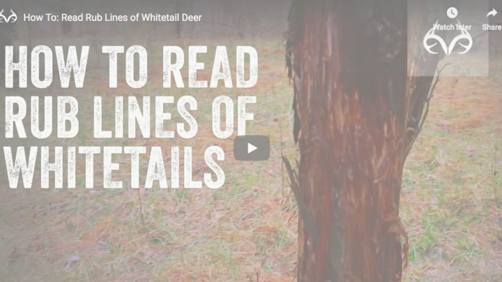 How to Read Rub Lines of Whitetail Deer Preview Image