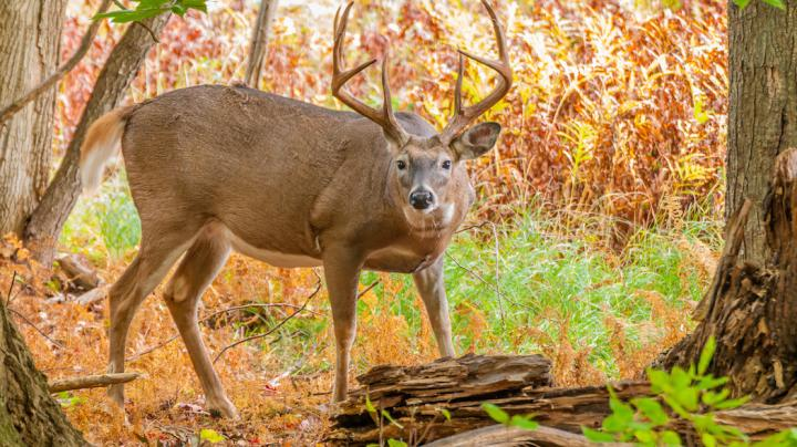 12 Reasons Some Hunters Kill Big Deer But Others Don't Preview Image