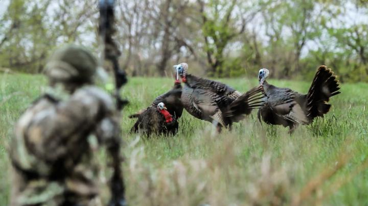 5 Reasons You're Missing Turkeys with a Bow Preview Image