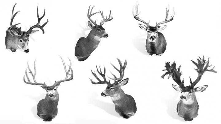 The 6 World Record Mule Deer By Subspecies Preview Image