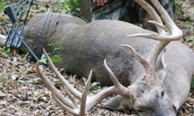 The Quest for the Record-Breaking Typical Whitetail Preview Image