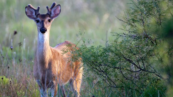 Spring and Summer Deer Scouting: Will Most Bucks Relocate Come Fall? Preview Image