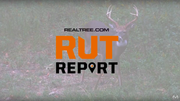 Deer Hunting: Introducing Realtree.com's New Rut Report Preview Image
