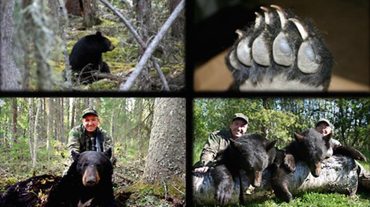 Using Good Optics to Spot More Black Bears Preview Image