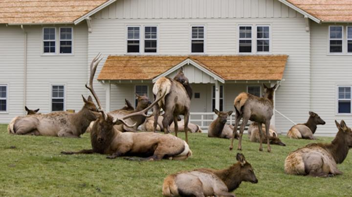 A Look Inside the Life of Suburban Elk Preview Image