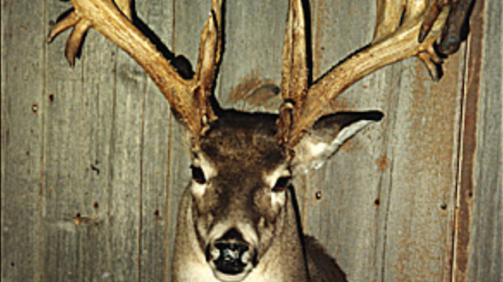 Record Deer: Top 5 Non-Typical Bucks from the Northeast Preview Image