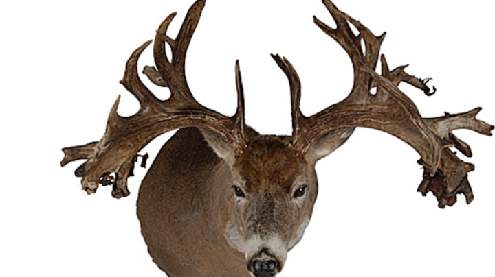 Record Deer: Top 5 Non-Typical Bucks from the West Preview Image