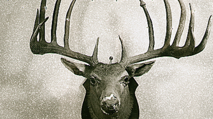 Record Deer: Top 5 Typical Bucks from the Southeast Preview Image